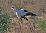 Osprey, Hawks, Old World Vultures