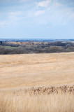 Kite Day at Spring Creek Prarie