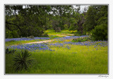 Texas Wildflowers 2010