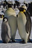 Antarctica 2007