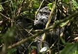 Wildlife of Uganda 2007