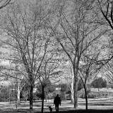 (365 - 222) Walking the dog