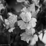 (365 - 284) Días y flores
