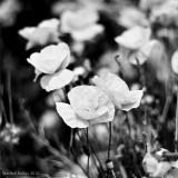 (365 - 339) La primavera dura un segundo