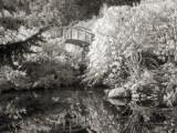 Moon Bridge at Kubota Gardens