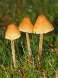 Mushroom V1a.jpg