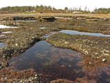 Tidepools at Point Holmes 1a.jpg