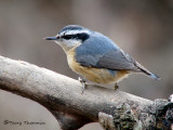 Red-breasted Nuthatch 18a.jpg