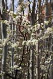 Spring in Abyaneh