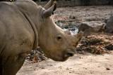 Rhino Portrait !