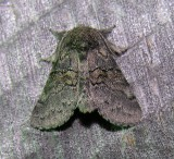 moth-04-08-2008-5.jpg