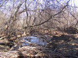 little pond near river