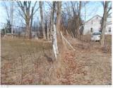 fence along property line - 3