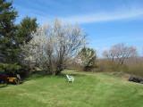 Plum tree in back yard