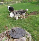 Sage and Sabrina in front garden