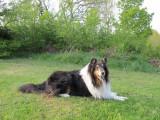 Sabrina in back garden