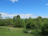 backyard-28-05-2010.jpg