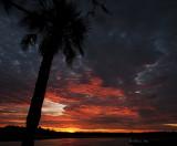 Palmetto Sun Rising