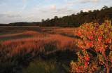 Autumn-Marsh-Scene-A1C.jpg