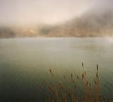 Reeds on Foggy Lake