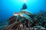 Anna and green sea turtle
