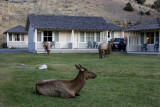 Mammoth Hot Springs Hotel, unexpected visit