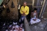 Al-Mahwit, the chicken killer