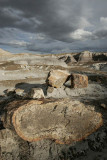 Petrified Forest, Arizona, USA