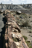 Giant Logs Trail