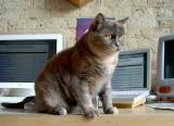 A Cat Named Eve