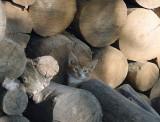 Lumber Mill Kittens 2001