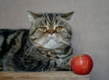 Apples Are Nice With Cats