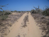 THIS WAS THE ROAD TO WHALES AT LAGUNA SAN IGNACIO