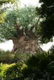 Tree of Life (Animal Kingdom)