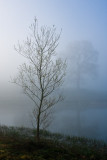 Ardingly Reservoir, Sussex