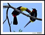 Costa Rica 2009/10