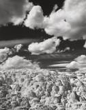 Mammoth Geyser no. 2, Yellowstone, 2001