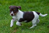 Puppy_shots_17403_D5000.jpg
