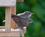 Bird_Table_21752_W700.jpg