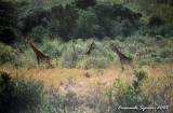 Hluhluwe Imfolozi Park - Motswari Private Game Reserve