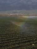 Field Rainbow Salinas Valley, California, March 2008
