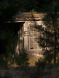 Through the Trees Pondosa, California - September, 2008