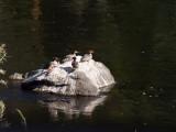 Fowl Klamath River, California- September, 2008