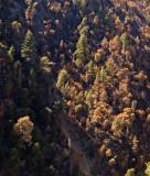 Canyon Wooded Wall Klamath River, California- September, 2008