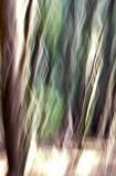 GALLERY:: Spirit,  Molokai -  November, 2007
