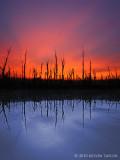 A Sunrise Reflection