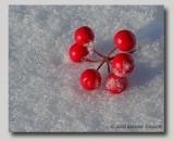 Round Reds on Fluffy White