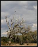 Bald eagle birdscape