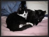 Rita and Salem