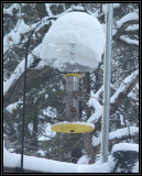 Christmas goldfinches